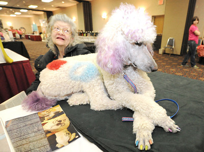 """Cotton,"" a four-year-old poodle, joins Rochelle Pruett in greeting guests at the Four State Women's Fare on Saturday at the Holiday Inn. The duo was assisting vendor Debra Pruett, of All Breed Paw Prints Mobile Grooming. Globe 